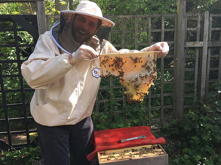 KAS bees