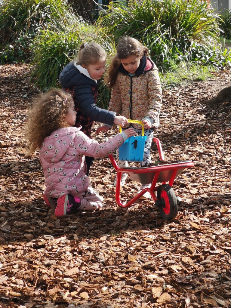 Ivy Wood playtime